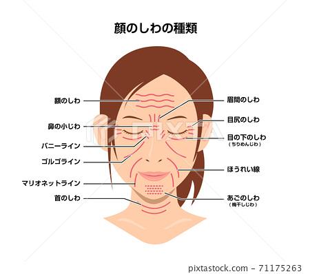 女人的臉上的皺紋(位置和名稱)矢量圖 71175263