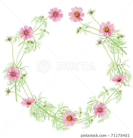 Pink cosmos watercolor illustration wreath 71178481