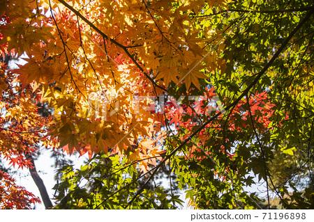 Autumn leaves 71196898