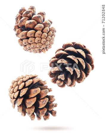 Pine cones fly on a white background, levitating 71202848