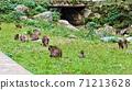 猴子湧向坎巴瀑布的草坪 71213628