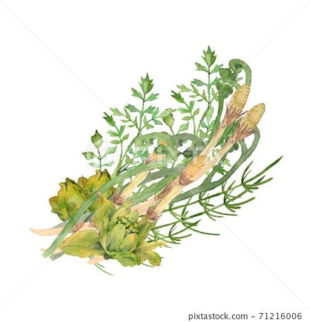 Spring wild plants watercolor illustration 71216006