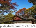 Autumn fall foliage in Jongmyo Shrine 71216124