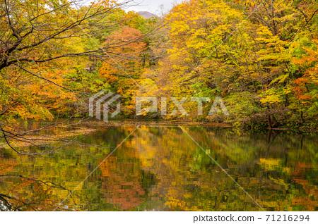 白世界的秋天,世界遺產,秋葉的十二個湖,大池 71216294