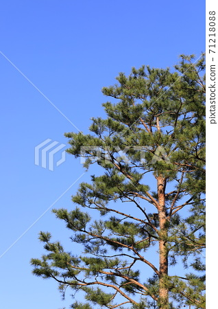 소나무와 파란 하늘이 보이는 풍경 71218088