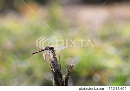날개달린 잠자리가 보이는 가을 풍경 71218493