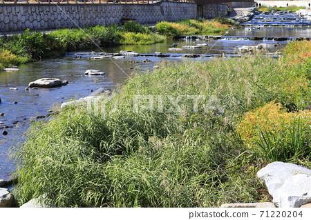 시냇물이 흐르는 아름다운 풍경 71220204