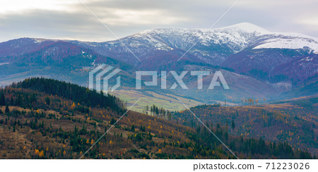 cold gloomy autumn morning in mountains. overcast sky above ridge with snow capped peaks. november scenery of carpathian rural area 71223026