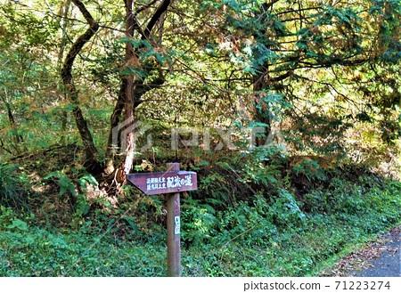 岡山縣新莊村五島公園,高地皇和五葉皇帝的分佈指南 71223274