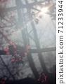 朦朧櫻花 71233944