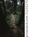 杉木林小徑 71235275
