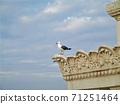 낭만적 인 건물의 가장자리에 띄어 푸른 하늘을 바라 보는 비둘기 71251464