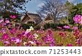 東有年 · 오키타 유적과 코스모스 밭 71253443