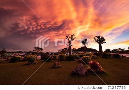 반다르 세리 베가 완의 바오밥있는 공원의 노을 71257736
