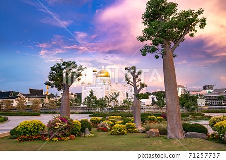 文萊猴麵包樹和老清真寺 71257737