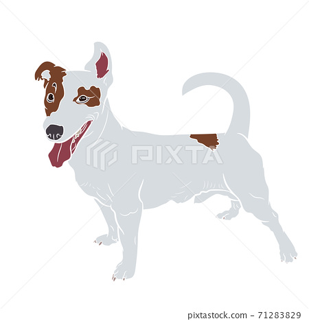 Adorable Jack russell terrier dog isolated on white background. 71283829