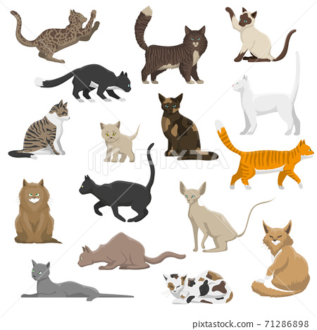 Domestic Cat Breeds Flat Icons Collection 71286898