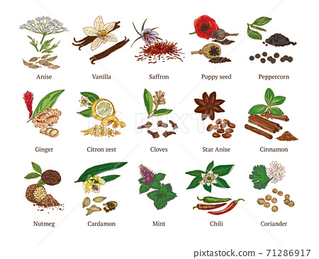 Colorful Sketch Healthy Spices Collection 71286917