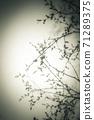 역광의 나뭇가지 71289375