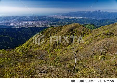丹澤/戶之岳的新鮮綠色大倉山脊和波多野/小田原的景色 71289530