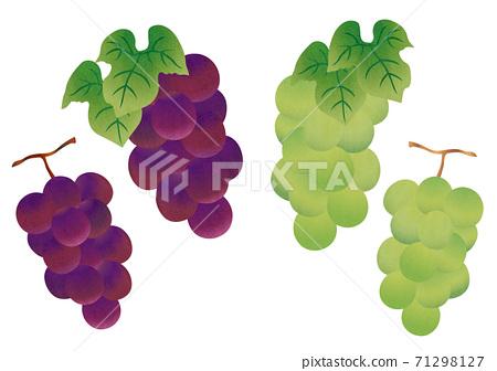 紅色和白色葡萄的物質插圖 71298127