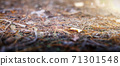 The pine forest. Macro shot, close-up with blurred background and foreground 71301548
