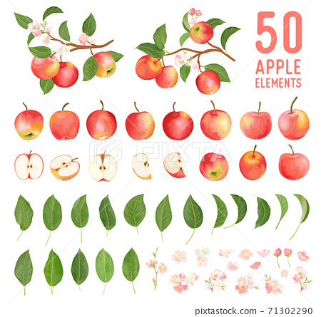 Watercolor elements of apple fruits, leaves and flowers for posters, wedding cards, summer boho banners 71302290