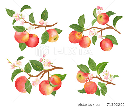 Watercolor apple branches, leaves and flowers for posters, wedding cards, summer banners 71302292