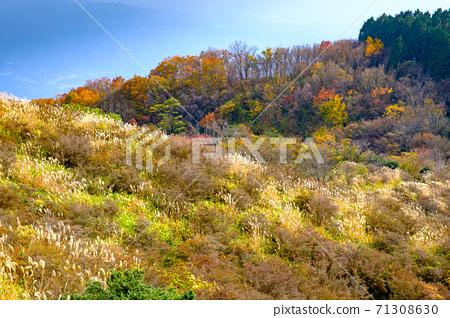야마토 葛城山의 산정 부근의 단풍 71308630