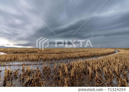 Lightning over the flooded rice fields in Valencia 71324204