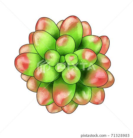 彩虹球肉質植物 71328983