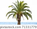Big green palm tree at the sea 71331779