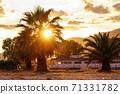 Orange sun and palm tree at sunset 71331782