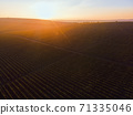 Green and red vineyard rows at sunset in Moldova 71335046