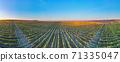 Panorama of green vineyard rows at sunset 71335047