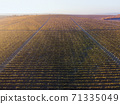 Green and red vineyard rows at sunset 71335049