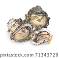 oysters an isolated on white background. 71343729