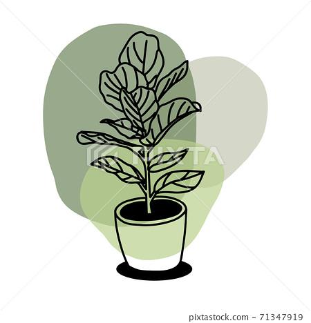 室内盆栽 植物 壶 71347919