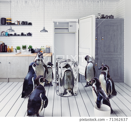 penguins at the kitchen 71362637