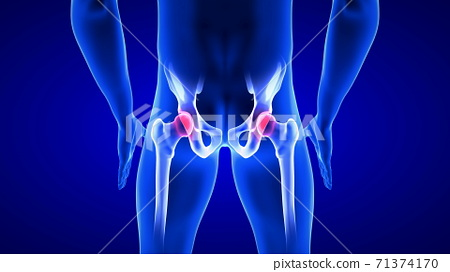 Hip Pain close-up illustration. Blue Human Anatomy Body 3D Scan render on blue background 71374170
