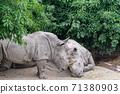 동물 타이베이시 동물원 타이베이 무자 동물원 귀여운 동물 71380903