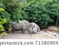 동물 타이베이시 동물원 타이베이 무자 동물원 귀여운 동물 71380904