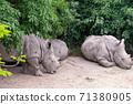 동물 타이베이시 동물원 타이베이 무자 동물원 귀여운 동물 71380905