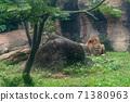 동물 타이베이시 동물원 타이베이 무자 동물원 사자 71380963