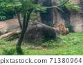 동물 타이베이시 동물원 타이베이 무자 동물원 사자 71380964