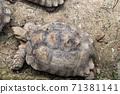 동물 타이베이시 동물원 타이베이 무자 동물원 귀여운 동물 71381141