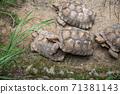 動物 台北市動物園 台北木柵動物園 可愛動物 71381143