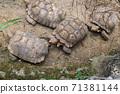 동물 타이베이시 동물원 타이베이 무자 동물원 귀여운 동물 71381144