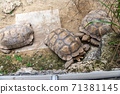동물 타이베이시 동물원 타이베이 무자 동물원 귀여운 동물 71381145