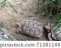 동물 타이베이시 동물원 타이베이 무자 동물원 귀여운 동물 71381146